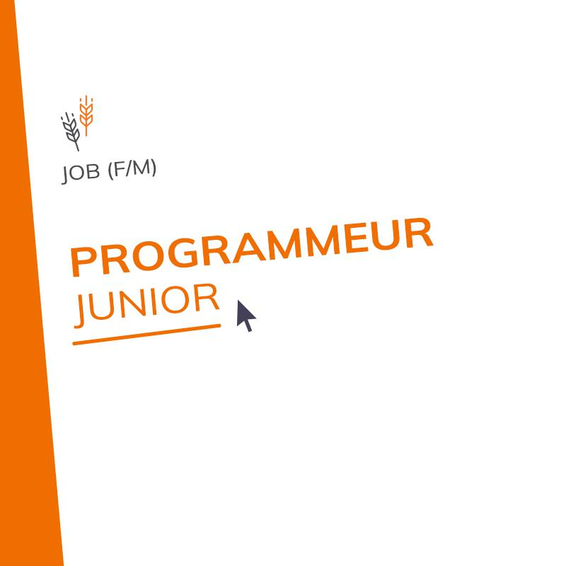 Programmeur Junior (M/F)